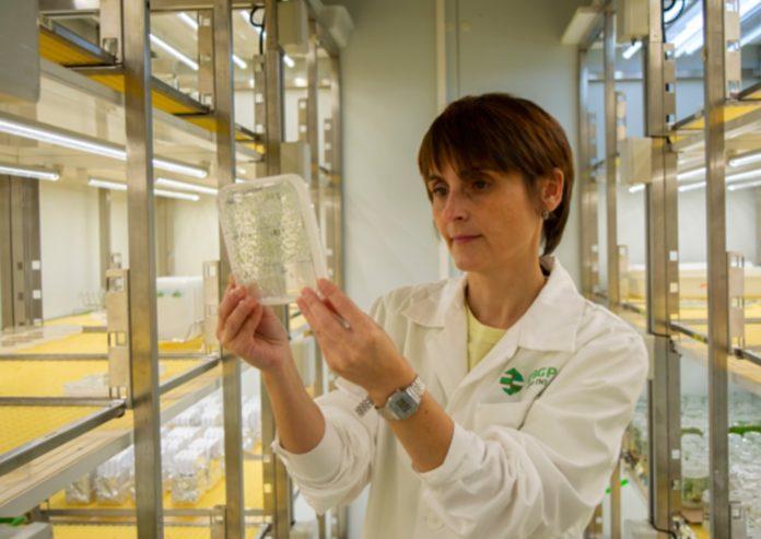 Patricia Fernández Calvo, no Centro de Biotecnología y Genómica de Plantas. Foto: Universidad Politécnica de Madrid.