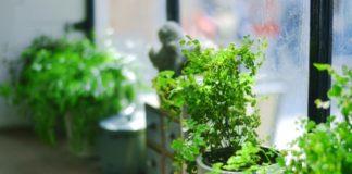 Ter plantas na casa fai máis agradable o espazo no que vivimos, pero non mellora a calidade do aire, segundo a ciencia.