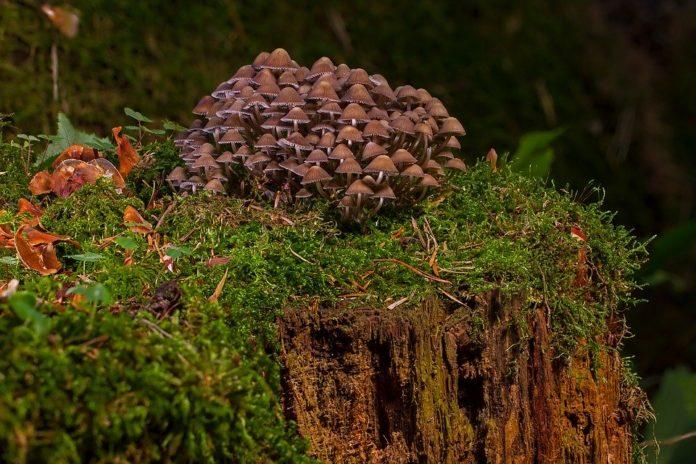 As setas son o alicerce de moitas relacións tróficas nos bosques.