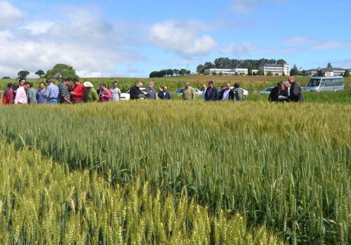 Xornada técnica do sector do trigo celebrada no Centro de Investigacións Agrarias de Mabegondo. Fonte: CIAM/Xunta.