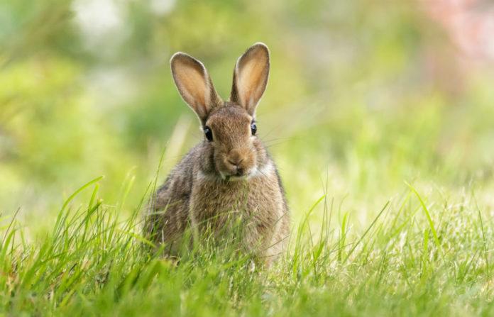 O coello está ameazado en España, Portugal e o sur de Francia. Foto: Hanna Knutsson (CC BY-NC-ND 2.0).