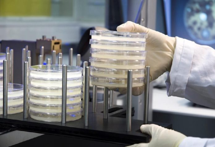 Pharmamar está especializada na investigación de antitumorais de orixe mariña. Foto: Pharmamar.
