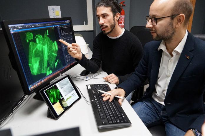 Nacho Insua amosa un modelo da lámina a Javier Montenegro. Foto: Andrés Ruiz.