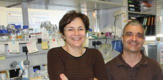 Mercedes Dosil lidera o estudo sobre os ribosomas no que colaborou Xosé Bustelo. Foto: DICYT.