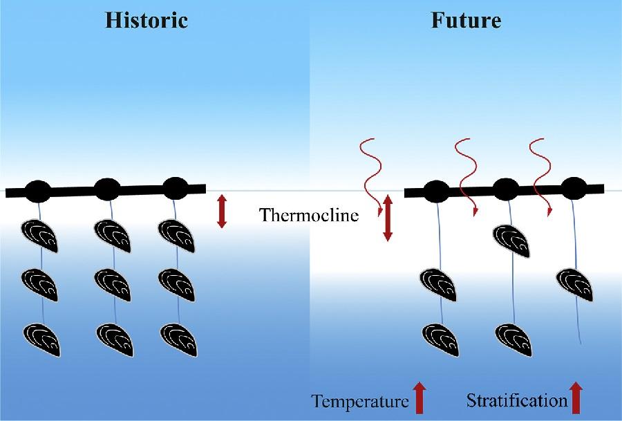 Esquema que representa a perda de produtividade das bateas debido ao quecemento e a estratificación. Fonte: Science of Total Environment.