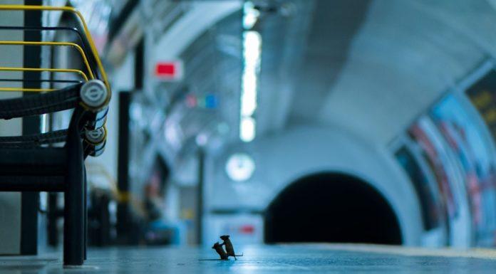 """""""Station Squabble"""", a foto gañadora do premio do público, realizada por Sam Rowley.""""Station Squabble"""", a foto gañadora do premio do público, realizada por Sam Rowley."""