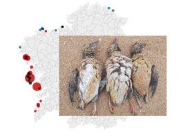 As aves máis afectadas son os araos papagaios (Fratercula arctica). Fonte: GN Hábitat/BDRI/Elaboración propia.