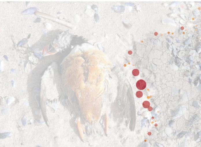 A maior parte das aves afectadas por verteduras localízase entre as rías de Muros e Noia e Pontevedra. Fonte: Pablo Covelo-Cemma/GN Hábitat/Elaboración propia.