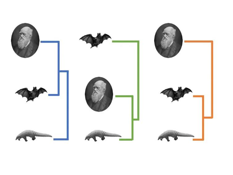 A comparación do xenoma completo do coronavirus SARS-CoV-2 con coronavirus de morcegos e pangolíns suxire que o virus que causou a pandemia da Covid-19 comparte un antepasado común máis próximo co virus de morcegos (esquerda). Cando a comparación se cingue á proteína S do virus que recoñece a receptor ACE2, obsérvase unha maior similitude entre o virus que afecta os humanos e o de pangolíns (centro). Con todo, outros trazos do virus humano sepárano por igual dos virus presentes en morcegos e pangolines (dereita). Figura adaptada de Zhang et al. (2020).