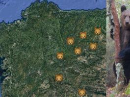 Lugares onde se constatou a presenza do oso pardo nos últimos anos. Á dereita, exemplar filmado no Macizo Central ourensán.
