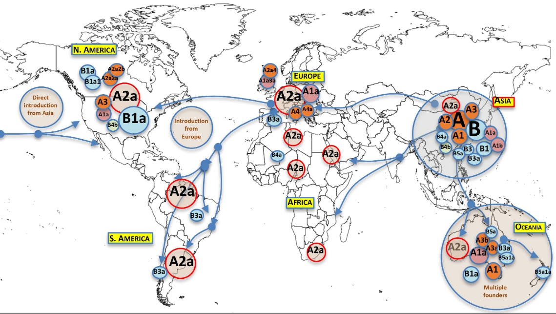 Mapa da presenza das distintas variantes do SARS-CoV-2 polo planeta. Fonte: Salas et al.