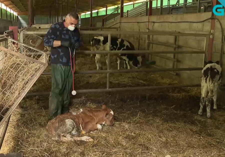 Información sobre un veterinario de Lugo que se usou como chanza no programa