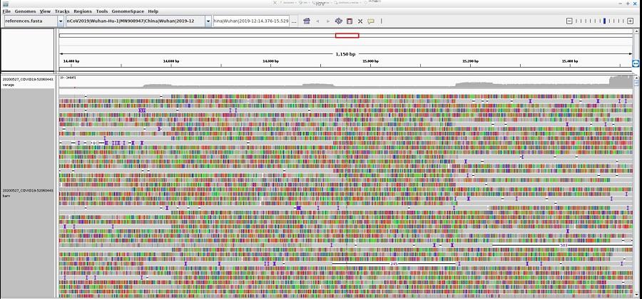 Fragmento do xenoma do virus analizado polo equipo do CiMUS. Fonte: Mobile Genomes.