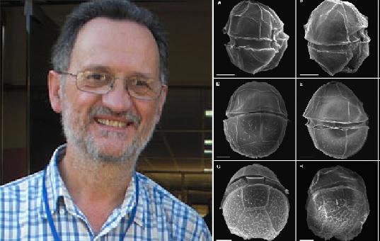 Os investigadores cariocas bautizaron a nova especie (detalle ao microscopio) co nome de Santiago Fraga. Fonte: IEO>/Harmful Algae.