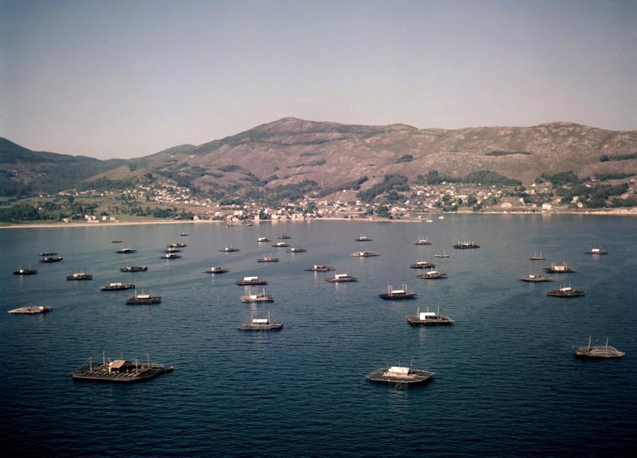 Vista aérea das bateas da ría de Vigo situadas entre a costa de Redondela e Vigo.