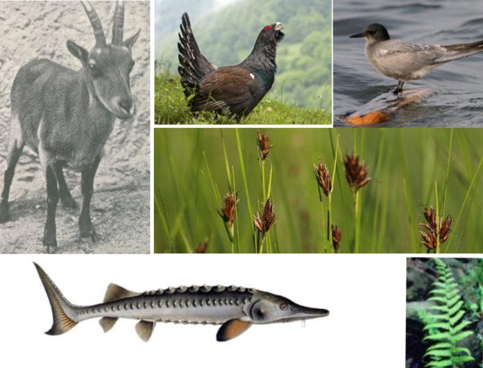 Algúns dos exemplos de flora e fauna que xa non se atopan en Galicia.