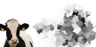 Os datos de 2018 expoñen que máis do 20% dos municipios galegos ten máis vacas ca persoas.