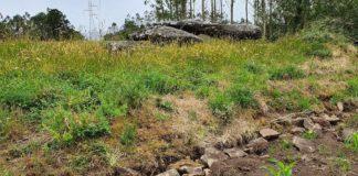 En primeiro termo, parte da mámoa de Pedra da Arca (o dolmen, ao fondo) destruída pola plantación de millo. Foto: Cándido Rico/Dólmenes de Galicia.