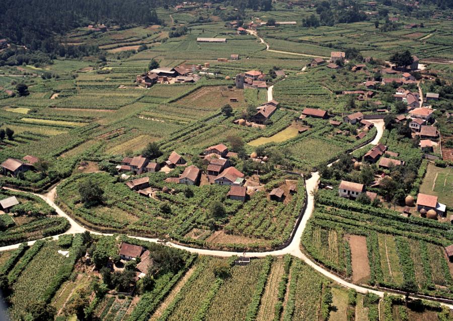Aldea de San Salvador de Cristiñade cos campos de viñas do Condado.
