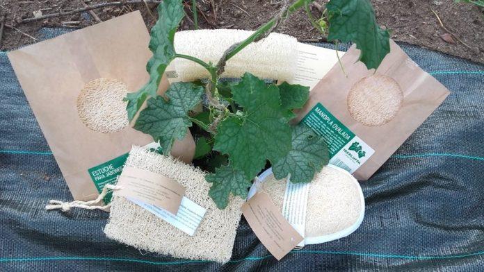 El producto final de las esponjas de calabaza. Foto: Ibérica de Esponjas Vegetales.
