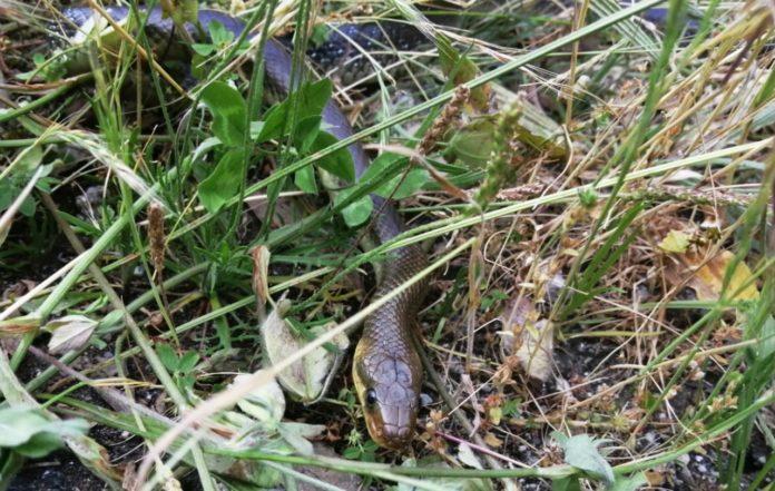 Imaxe da serpe