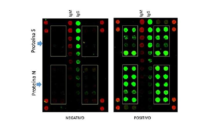 Imaxe de fluorescencias obtida co método SCOVAM tras a análise de dúas mostras, unha negativa (esquerda) e outra positiva. Os rectángulos amarelos enmarcan as proteínas do virus inmobilizadas en SCOVAM, por duplicado, e dúas concentracións diferentes. Os puntos verdes determinan a presenza do anticorpo IgG (infección 'pasada'), que na imaxe domina sobre IgM (infección 'temperá'). As columnas de puntos verticais de intensidade decrecente son marcadores de cada tipo de anticorpos, e os pares de puntos vermellos das esquinas son marcadores de posición. Fonte: CAB-INTA-CSIC.