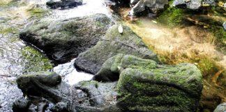 Imaxe da virxe no río Sar. Foto: Apatrigal.