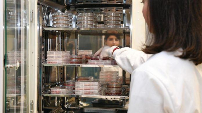 Laboratorio da USC.