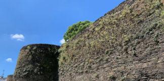 A investigación busca controlar o proceso de proliferación de especies na muralla. Foto: USC.