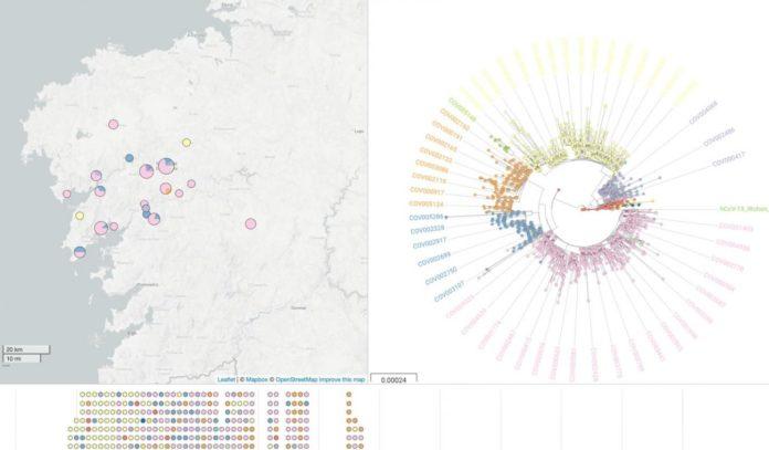 Mapa e árbore filoxenética do SARS-CoV-2 en Galicia, proporcionadas por NextSpain. Foto: Duvi.