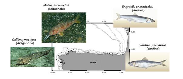 Puntos de mostraxe e especies analizadas. Fonte: IEO.