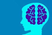 """A autora expón que hai evidencias científicas que demostran que os conceptos """"cerebro masculino"""" e """"cerebro feminino"""" son moi discutibles."""