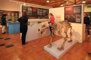 Recreación dun oso das cavernas atopado no Courel. Foto: Turismo Ribeira Sacra.