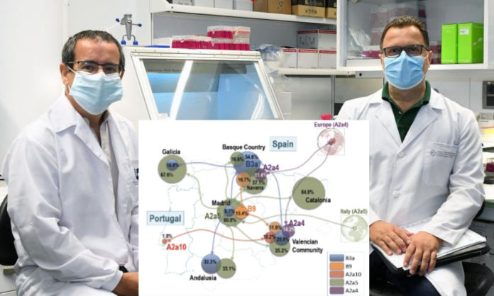 Na imaxe, Antonio Salas (esquerda) e Federico Martinón, xunto a un esquema da circulación en España e Portugal das principais cepas do SARS-CoV-2. Fonte: USC/Zoological Research.