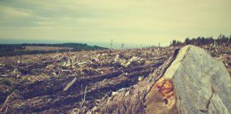 A degradación ambiental é un dos factores que leva á aparición de pandemias causadas por patóxenos presentes na natureza. Foto: Pixabay.