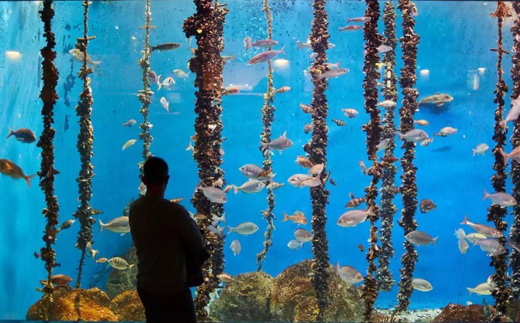 O Aquarium Finisterrae mantén abertas as súas salas con reserva previa. Foto: MC2.