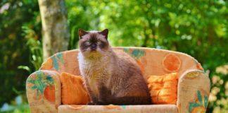 Os investigadores británicos describen como mover o ollo lentamente, abríndoo e pechándoo, pode facer que os gatos se sintan cómodos con persoas descoñecidas.