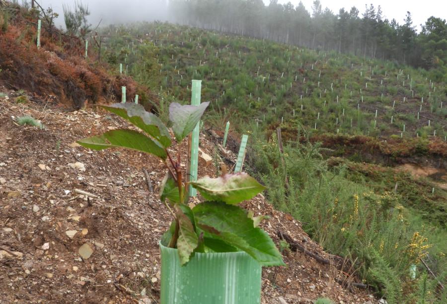 Unha das plantacións de froiteiras realizadas na campaña 2019-2020. Foto: Fundación Oso Pardo.