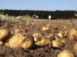 As medidas de control parecen estar freando o avance da couza en Galicia. Foto: xunta.gal.