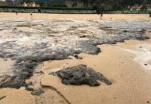 Restos do bosque fósil atopados na praia de Bastiagueiro. Imaxe: @ppoleiros (Twitter).