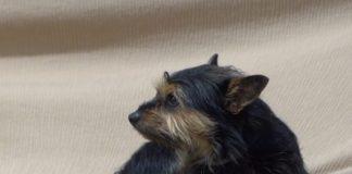Os mitos e falsas crenzas afectan algunhas veces ao desenvolvemento dos cans.