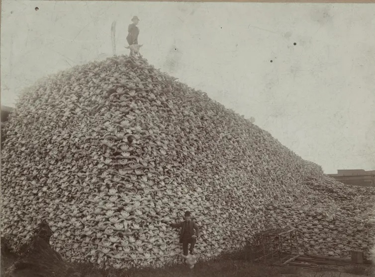 Dous homes posan cunha pía de cranios de bisonte. Imaxe: Michigan Carbon Works, Rougeville MI, 1892. Colección Histórica Burton, Biblioteca Pública de Detroit.