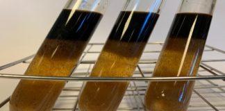 Dos restos da poda obtense furfural, unha molécula para a síntese de produtos de interese industrial. Foto: Duvi.