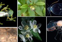Algúns dos exemplos de seres vivos case transparentes.