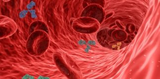 As diferentes barreiras do sistema inmunitario xogan un papel esencial contra o coronavirus, como con outros patóxenos. Foto: Pixabay.
