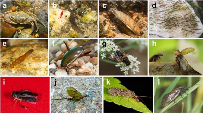 A base de datos reúne información de 280 grupos de especies e xéneros. Fotos: Adolfo Codero, Jesús Arribas, Pere Bonada, José Antonio Carbonell e María Alp.