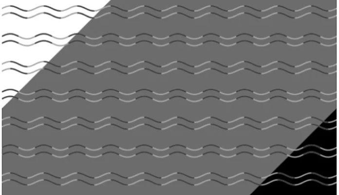 A ilusión óptica evidencia a cegueira á curvatura. Imaxe: Kohske Takahashi.