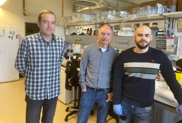 Os investigadores Samuel Seoane, Román Pérez-Fernández e Leandro Ávila, nunha imaxe de arquivo. Foto: CiMUS.