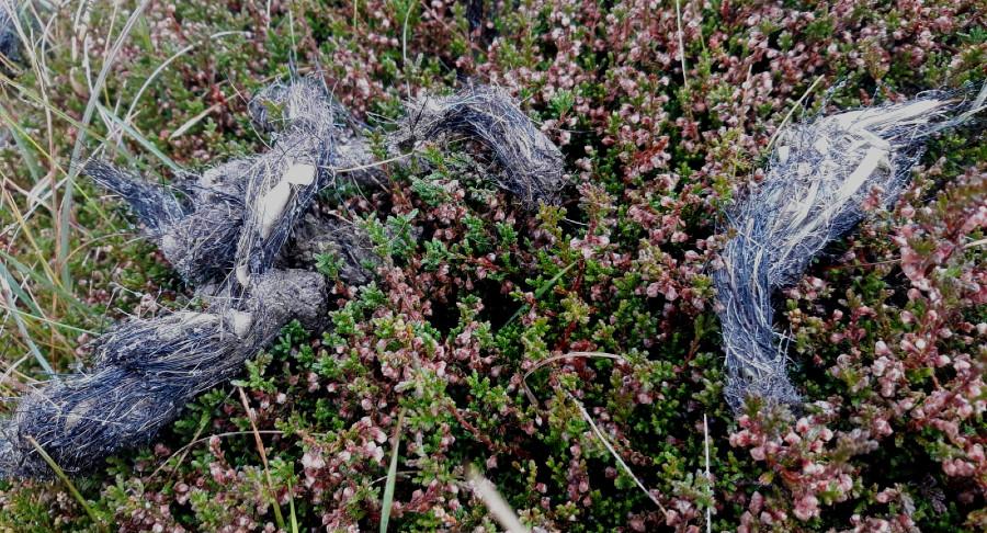 Os excrementos de lobo son un dos sinais para o estudo da presenza do animal no territorio. Foto: R. Pan.