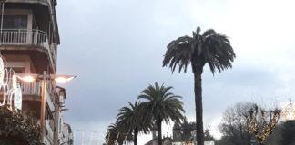 Palmeira de Carreira do Conde, en Santiago, afectada polo picudo vermello, nunha imaxe tomada en xaneiro de 2021. Foto: R. Pan.